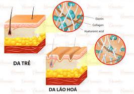 tắm-trắng-collagen